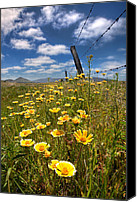 Barbed Wire Fence Canvas Prints - Wildflowers and Barbed Wire Canvas Print by Peter Tellone