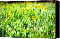 Signed Canvas Prints - Wildflowers and Wind Canvas Print by Skip Nall