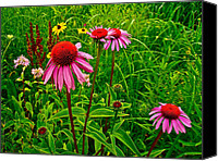 Indiana Dunes Canvas Prints - Wildflowers in Indiana Dunes National Lakeshore Canvas Print by Ruth Hager