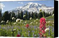 Snow Capped Canvas Prints - Wildflowers In Mount Rainier National Canvas Print by Dan Sherwood