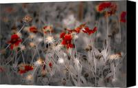 Digiart Canvas Prints - Wildflowers of the Dunes Canvas Print by DigiArt Diaries by Vicky Browning