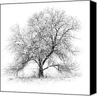 Lake Canvas Prints - Willow And Blizzard Canvas Print by Altus Photo Design