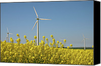 Rape Canvas Prints - Wind Turbines Across A Field Of Flowering Oilseed Rape (brassica Napus) Canvas Print by Maria Jauregui Ponte