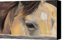 Buckskin Canvas Prints - Window to the Soul Canvas Print by Nichole Taylor
