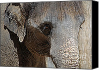 Baby Elephant Canvas Prints - Windows to the Soul Canvas Print by Lisa Holmgreen