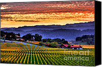 Vineyard  Canvas Prints - Wine Country Canvas Print by Mars Lasar