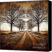 Mono Canvas Prints - Winter Avenue Canvas Print by Meirion Matthias