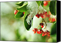 Red Berries Canvas Prints - Winter Berries Canvas Print by Rebecca Sherman