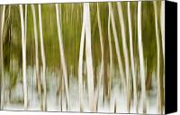 Verticle Canvas Prints - Winter Birch- Abstract Canvas Print by Thomas Schoeller