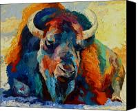 Bison Canvas Prints - Winter Bison Canvas Print by Marion Rose