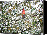 Cardinals. Wildlife. Nature. Photography Canvas Prints - Winter Cardinal Canvas Print by Jennifer Wosmansky