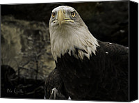Auburn Canvas Prints - Winter Eagle Canvas Print by Bob Orsillo