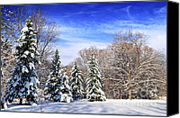 Forest Canvas Prints - Winter forest with snow Canvas Print by Elena Elisseeva