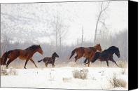 Wild Stallion Canvas Prints - Winter Gallop Canvas Print by Mike  Dawson