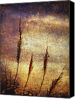 Brown Color Canvas Prints - Winter Gold Canvas Print by Skip Nall