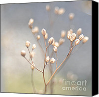 Beige Colours Canvas Prints - Winter Light Canvas Print by Iris Lehnhardt