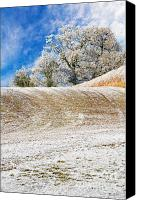 Hedge Canvas Prints - Winter Canvas Print by Meirion Matthias