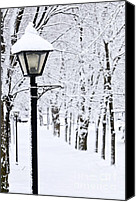Frozen Canvas Prints - Winter park Canvas Print by Elena Elisseeva