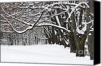 Alley Canvas Prints - Winter park with snow covered trees Canvas Print by Elena Elisseeva