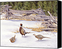 Pheasant Painting Canvas Prints - Winter Ringed-Necks Canvas Print by Richard De Wolfe