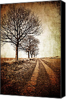 Rural Photo Canvas Prints - Winter Track With Trees Canvas Print by Meirion Matthias