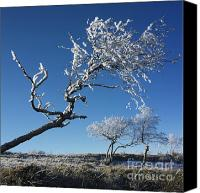 Bare Tree Canvas Prints - Winter tree. Canvas Print by Bernard Jaubert