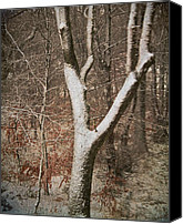 "\""painterly Photography\\\"" Photo Canvas Prints - Winter Woods Canvas Print by Odd Jeppesen"