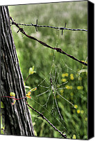 Barbed Wire Fence Canvas Prints - Wired Canvas Print by JC Findley