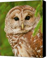 Barred Owl Canvas Prints - Wise One Canvas Print by Ron  McGinnis