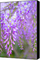 Atlanta Canvas Prints - Wisteria Flowers In Bloom Canvas Print by Natalia Ganelin