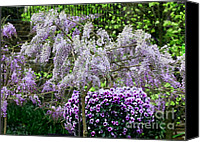 Vine Canvas Prints - Wisteria Canvas Print by Marjorie Imbeau