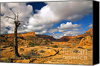 Tree Canvas Prints - Withered Canvas Print by Mike  Dawson