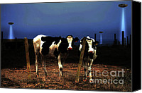 Cow Mixed Media Canvas Prints - Witness . The Arrival Canvas Print by Wingsdomain Art and Photography