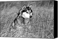 Black And White Pyrography Canvas Prints - Wolf in the Grass Canvas Print by Kyle Gray