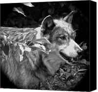 Wolf Photo Shot Canvas Prints - Wolf Run Canvas Print by Debra     Vatalaro