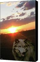Wolf Photo Shot Canvas Prints - Wolf Sunset Canvas Print by Debra     Vatalaro