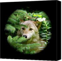 Wolf Photo Shot Canvas Prints - Wolf Thick Of The Woods Canvas Print by Debra     Vatalaro