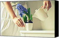 Rotterdam Canvas Prints - Woman Watering Blue Hyacinth Canvas Print by Photo by Ira Heuvelman-Dobrolyubova