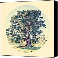 Big Tree Canvas Prints - Wonderland Tree Canvas Print by Linde Townsend