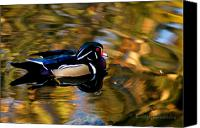 Bruster Canvas Prints - Wood Duck Canvas Print by Clayton Bruster