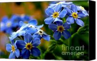 "\""forget Me Not Flowers\\\"" Canvas Prints - Wood Forget Me Not Blue Bunch Canvas Print by Ryan Kelly"