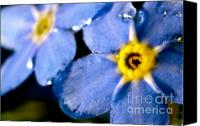 "\""forget Me Not Flowers\\\"" Canvas Prints - Wood Forget Me Not Blue Two Canvas Print by Ryan Kelly"