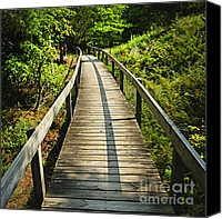 Hiking Canvas Prints - Wooden walkway through forest Canvas Print by Elena Elisseeva