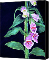 Wild-flower Pastels Canvas Prints - Woodland Foxglove Canvas Print by Nancy Jolley