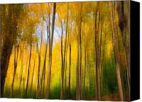Impression Canvas Prints - Woodland Impression Canvas Print by Fred LeBlanc