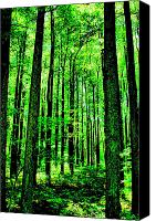 Summer Scenes Canvas Prints - Woodland Walk Canvas Print by Emily Stauring