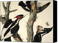 Woodpecker Canvas Prints - Woodpecker Canvas Print by John James Audubon