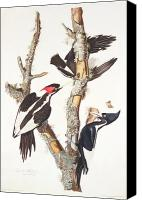 Woody Canvas Prints - Woodpeckers Canvas Print by John James Audubon