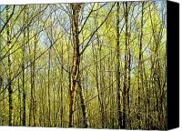 Trees Canvas Prints - Woods 2 Canvas Print by Roberto Alamino