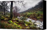 Valley Canvas Prints - Woods Landscape Canvas Print by Carlos Caetano